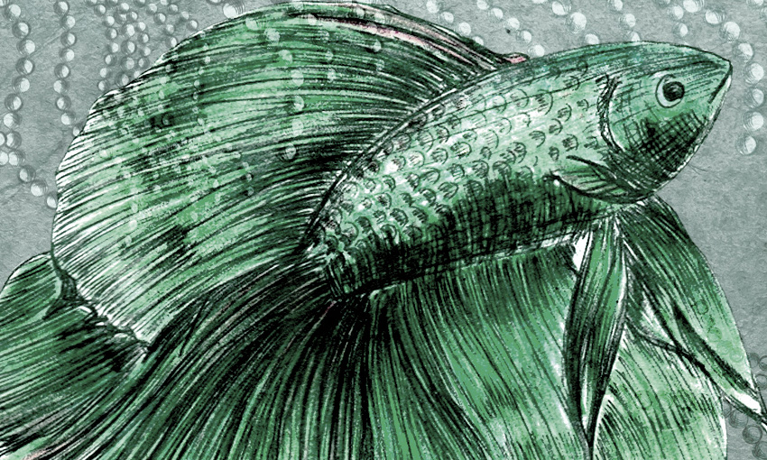 dettaglio carta da parati pesce