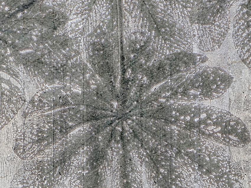 dettaglio carta da parati foglie su cemento