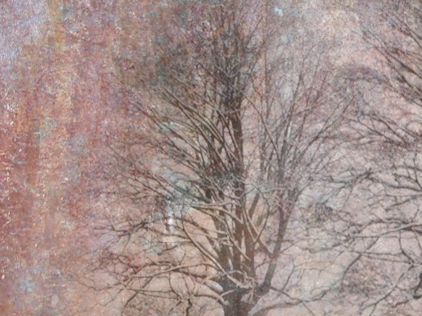 Dettaglio dell'albero