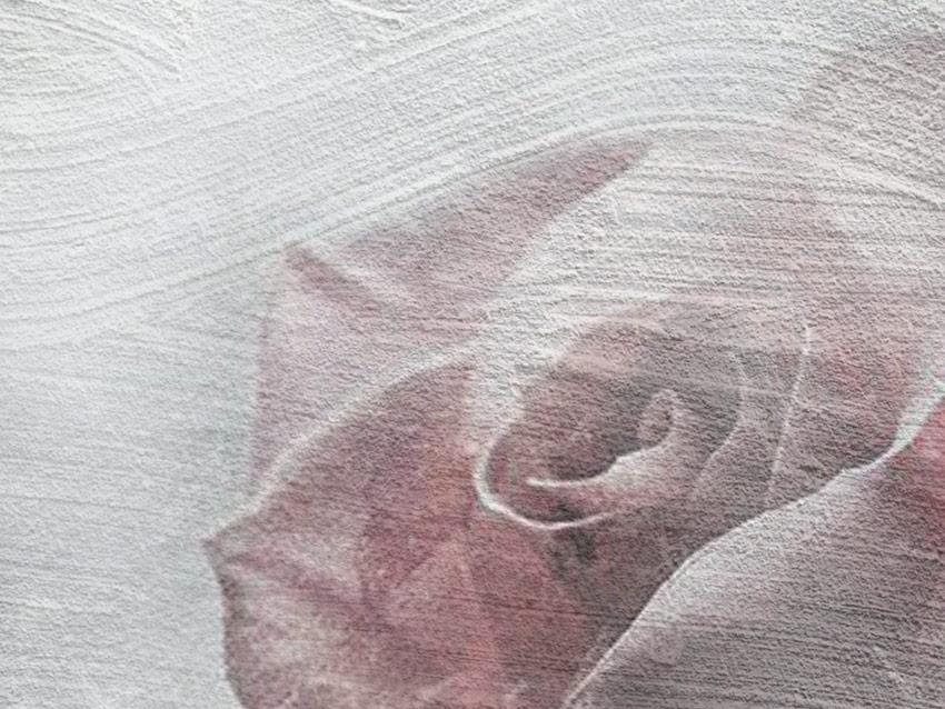 Dettaglio della Rosa