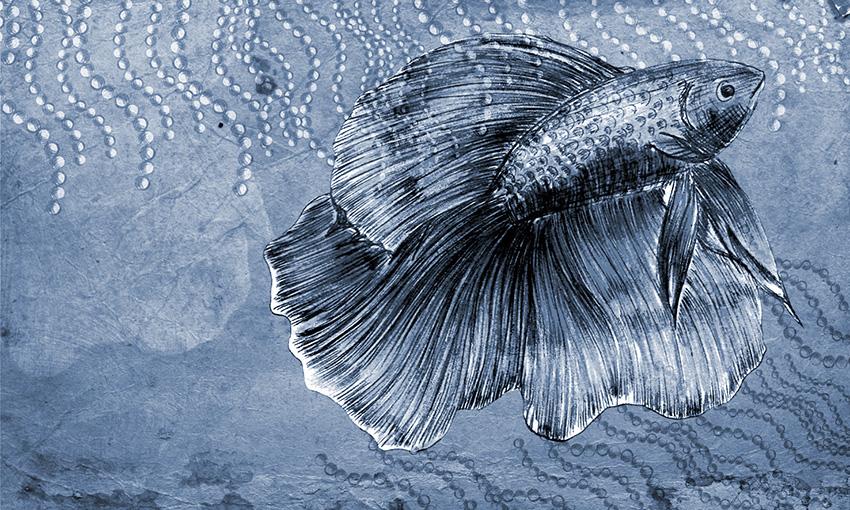 carta da parati pesce colore 3