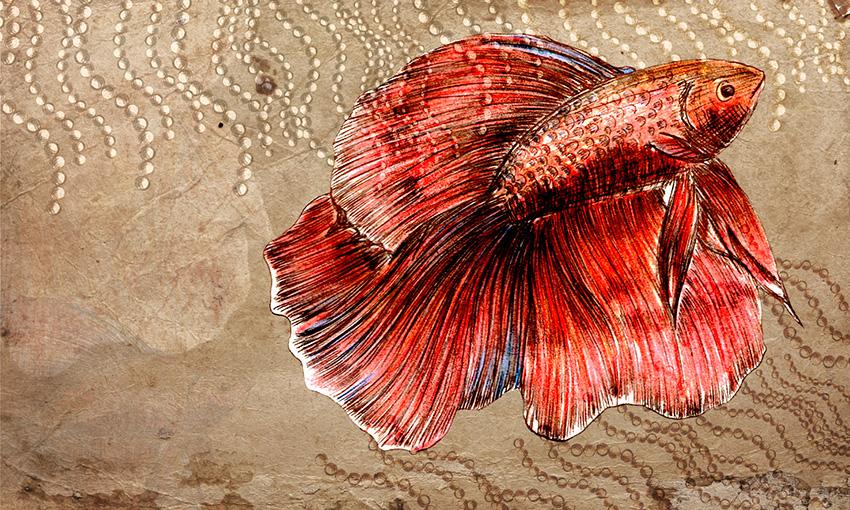 carta da parati pesce colore 5