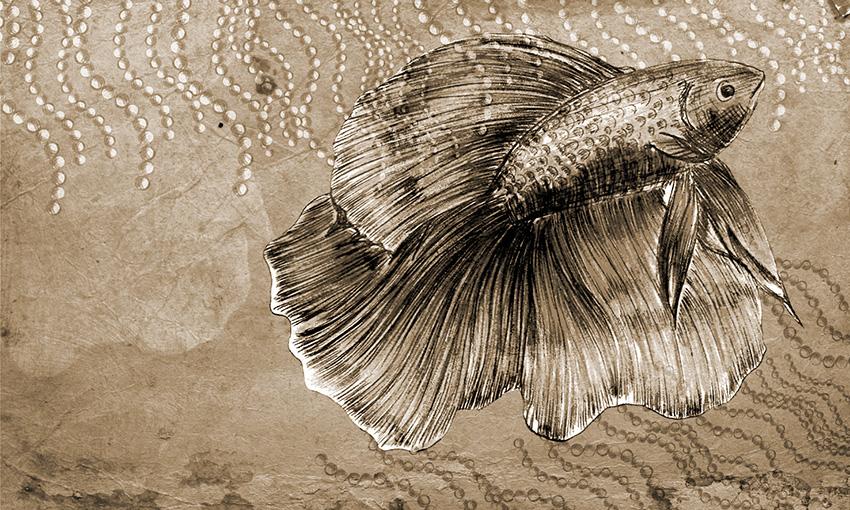 carta da parati pesce colore 4