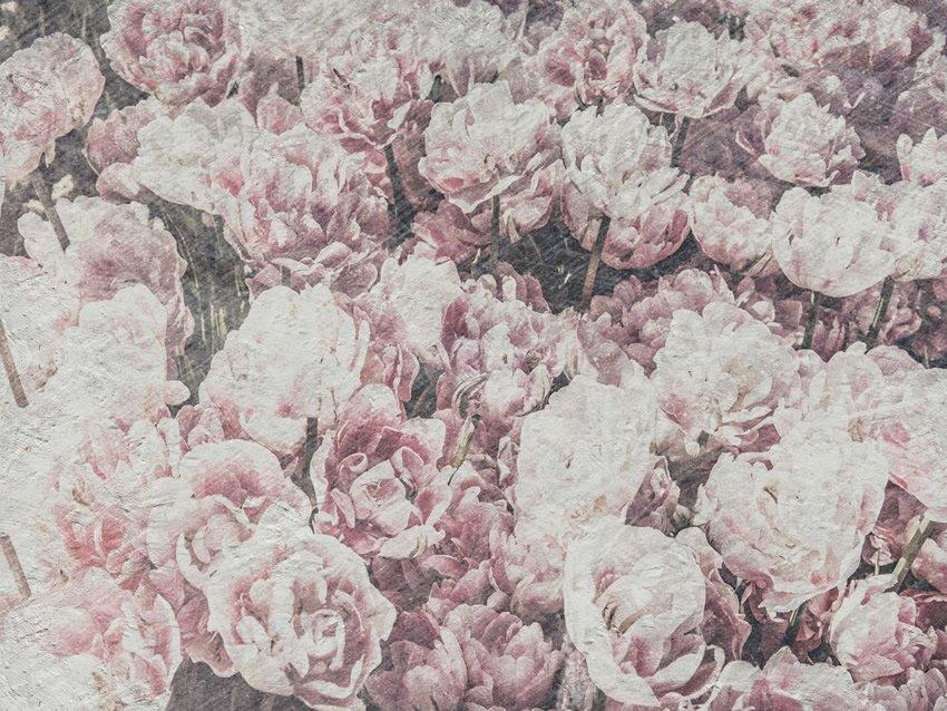 distesa di fiori carta da parati
