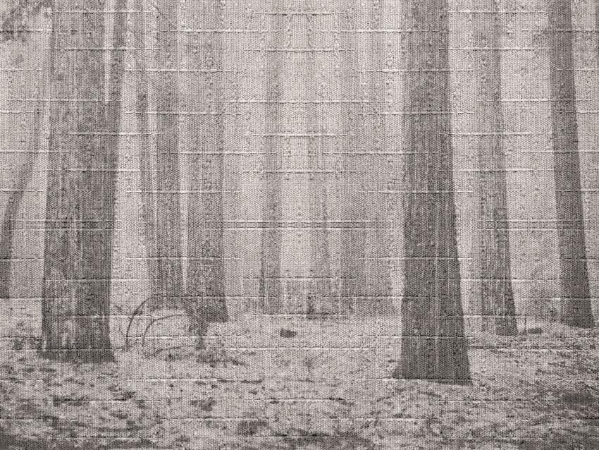 alberi nella nebbia carta da parati
