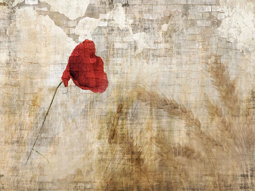 fiore rosso carta da parati