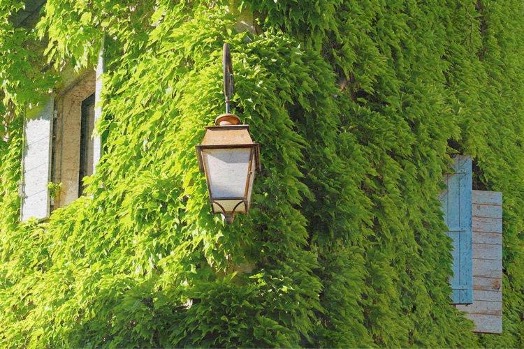 muro estero con verde verticale
