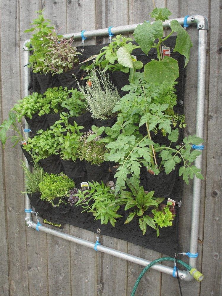 piante per muro verde verticale